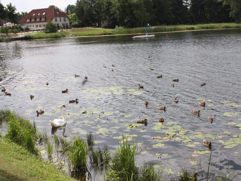 Darguner See in Mecklenburg-Vorpommern